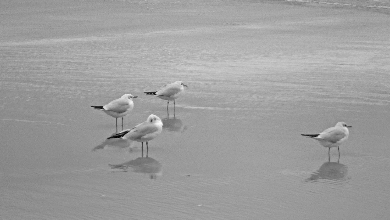 Möwen am Strand in schwarz-weiß für meinen Newsletter