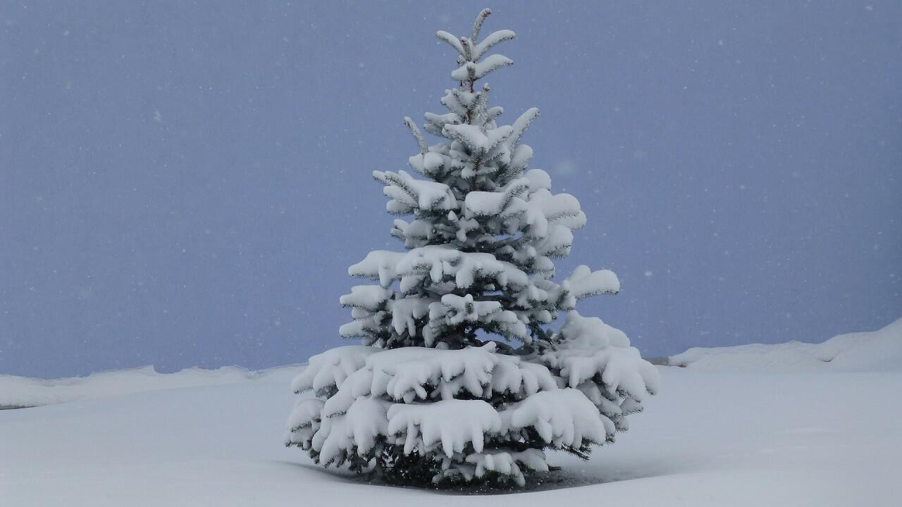 Ein Weihnachtsgruß mit einer schneebedeckten Tanne
