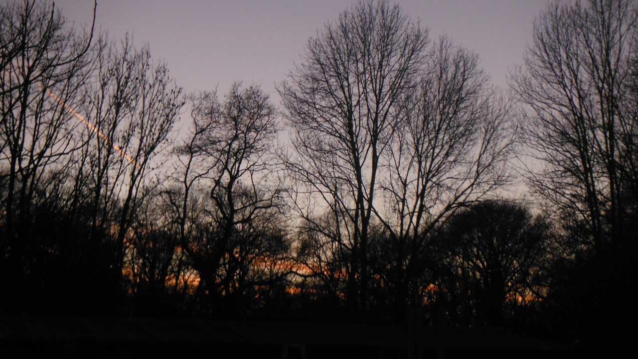 Abendhimmel über dem Wald