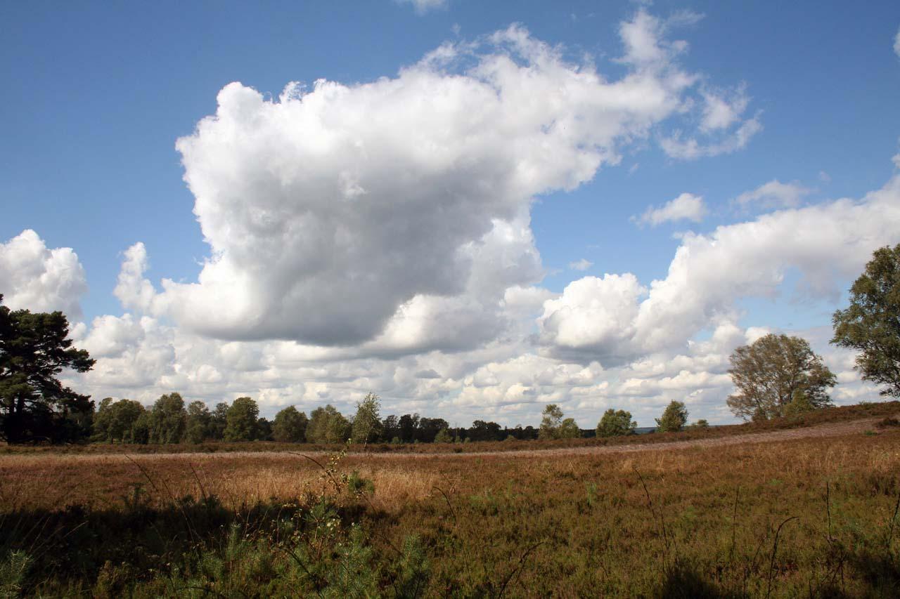 Lüneburger Heide Panoramblick mit Himmel und Wolken