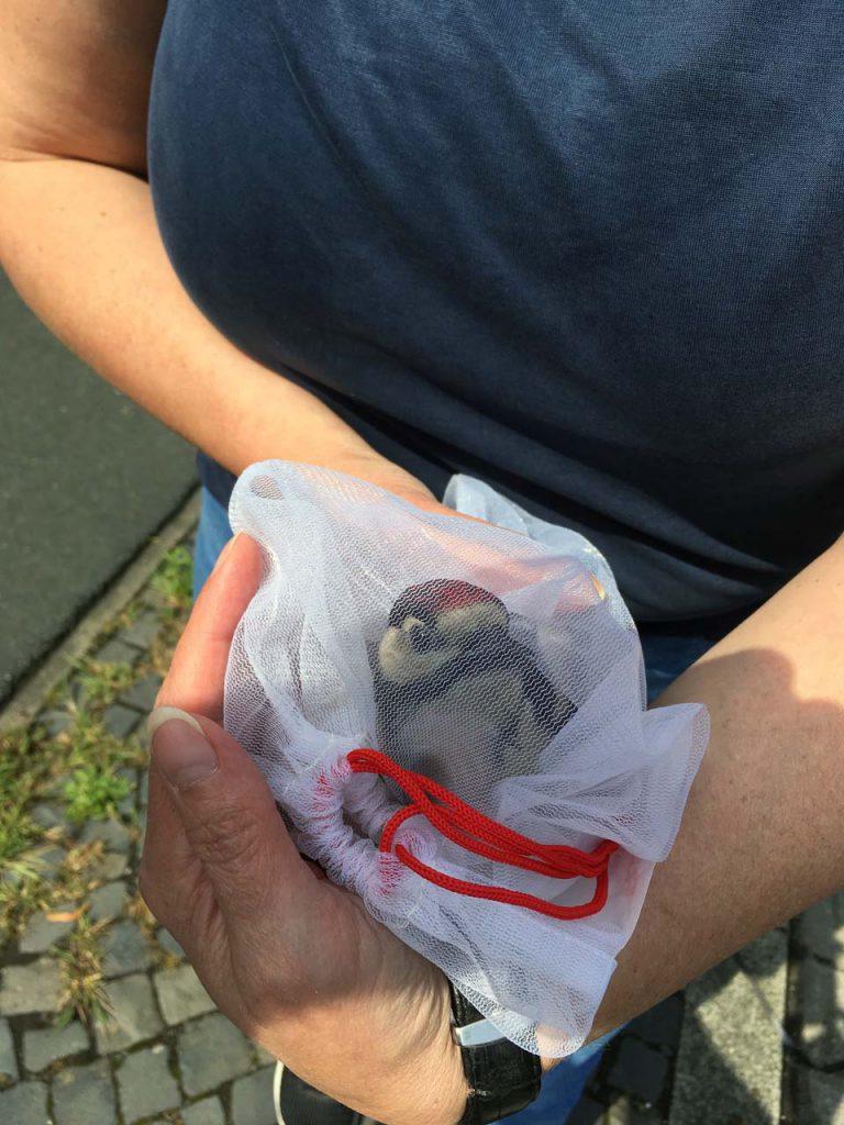Ankunft mit dem kleinen verletzten Buntspecht in der Tiho Hannover