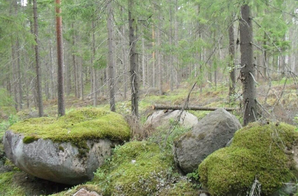 Wälder in Finnland typisch sind die großen Findlinge