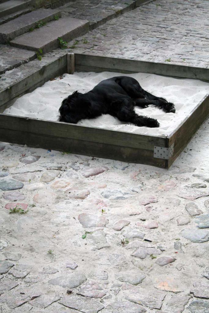 Riesenschnauzerhündin Coco im Sandkasten vor unserem Ferienhaus auf der dänischen Insel Aero