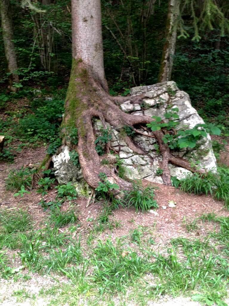 Baum und Stein