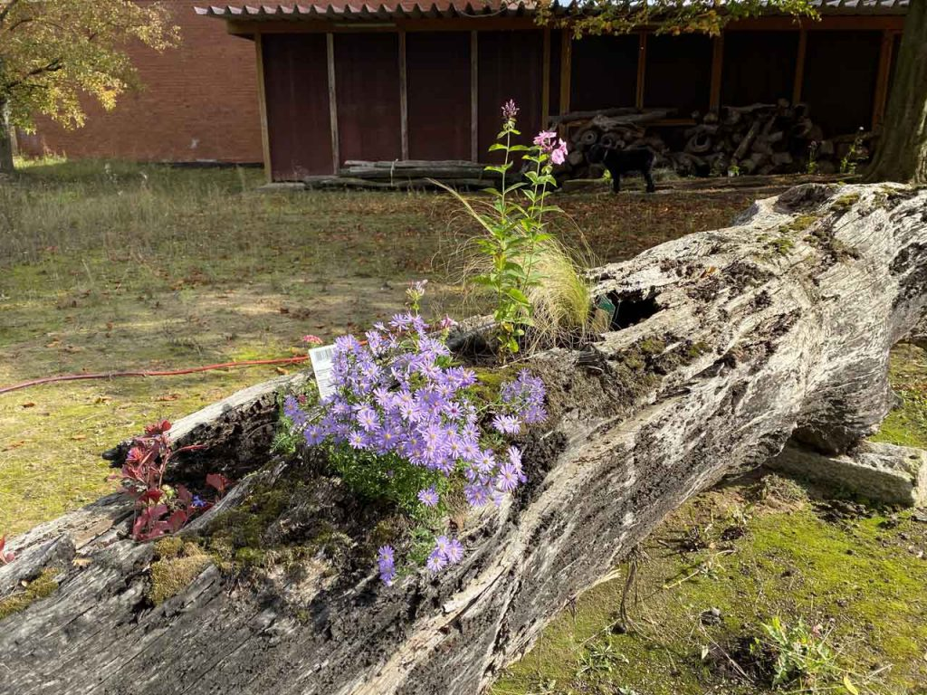 Mooreiche bepflanzt