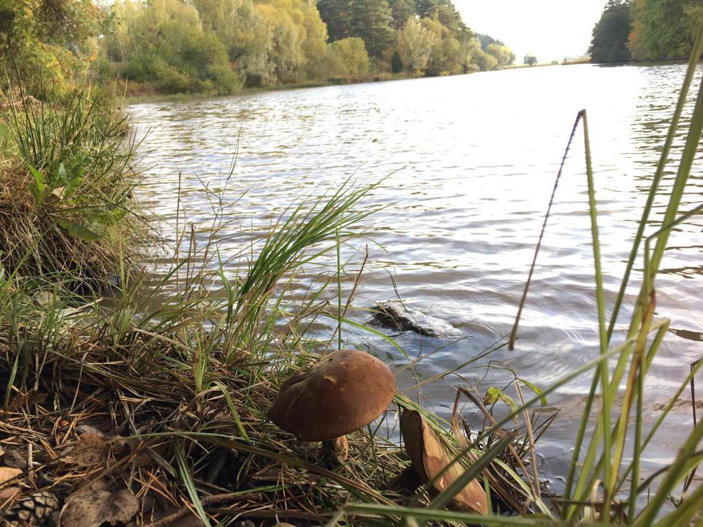 Steinpilz an einem See in Turku