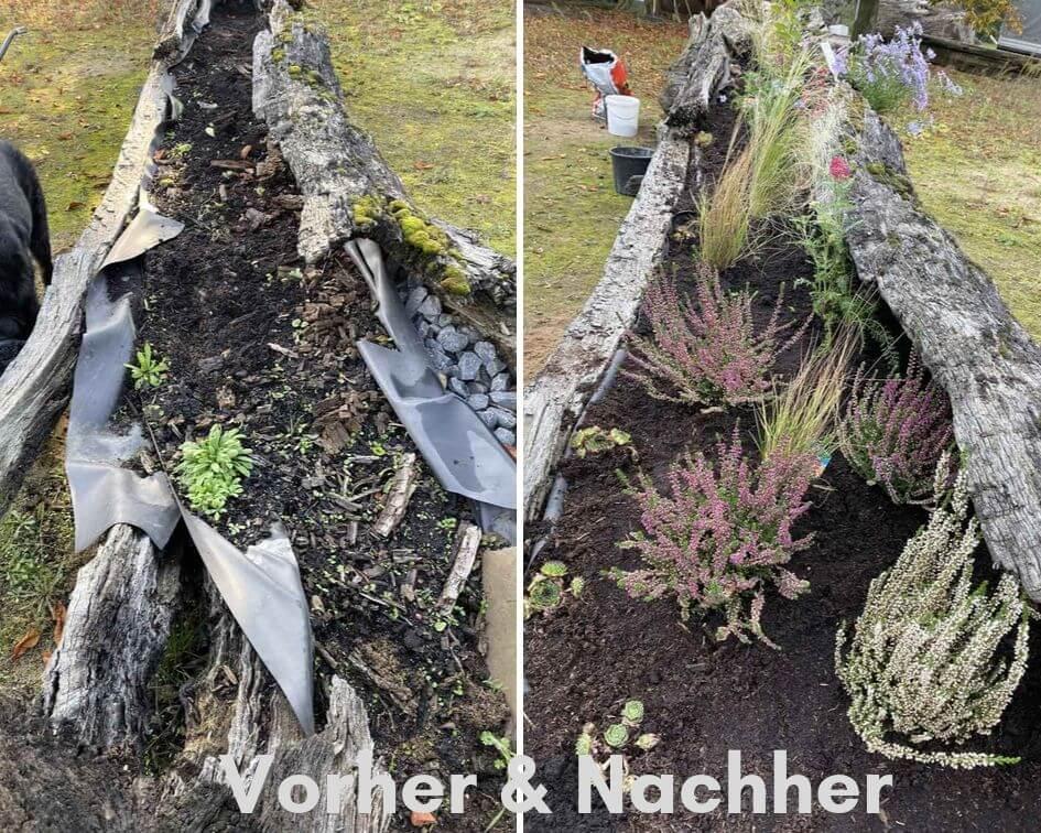 Vorher & Nachher Collage einer Bepflanzung eines Mooreichenstammes