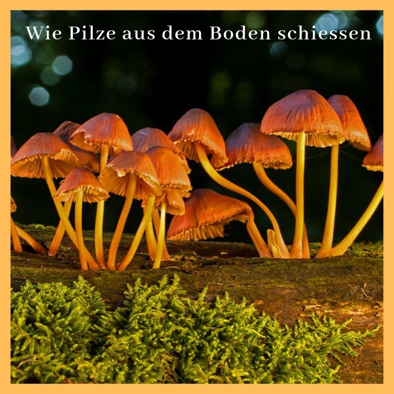 Zitat Wie Pilze aus dem Boden schiessen