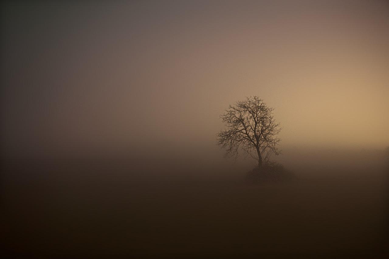 Nacht und Nebel und ein Baum
