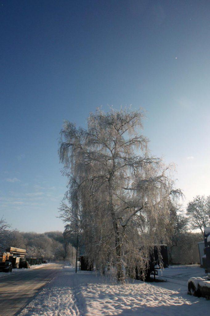 Verschneite Bäume im Gewerbegebiet in Ahrbergen