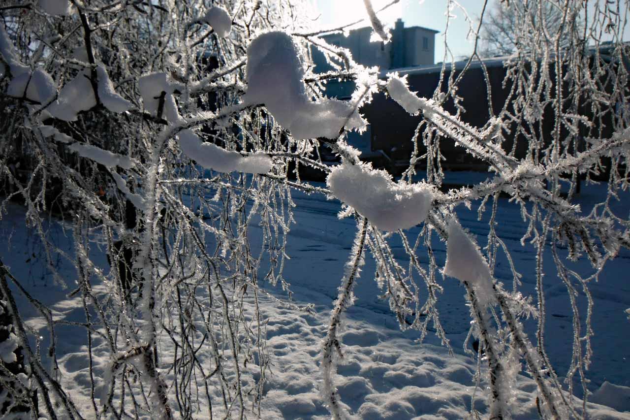 Schnee auf den Zweigen und es hat gefroren