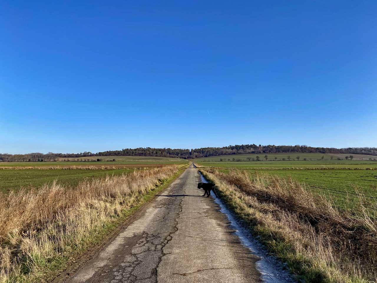 Hunderunde vor der Leinenpflicht im Hildesheimer Land