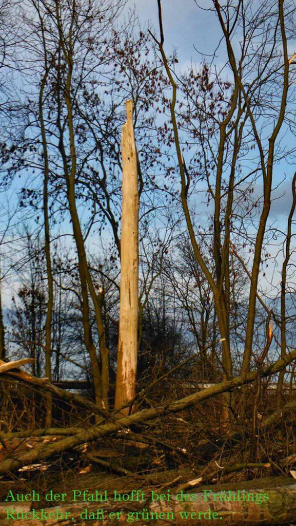 Hoffnung im Frühling mit einem finnischen Sprichwort