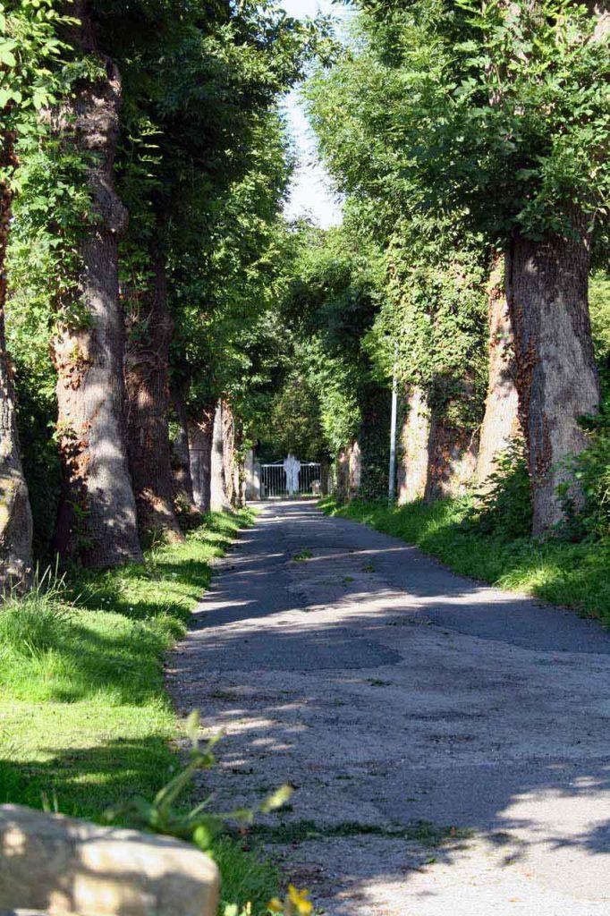 Privatstraße mit einer Baumallee und einem schönen weißen Tor am Ende