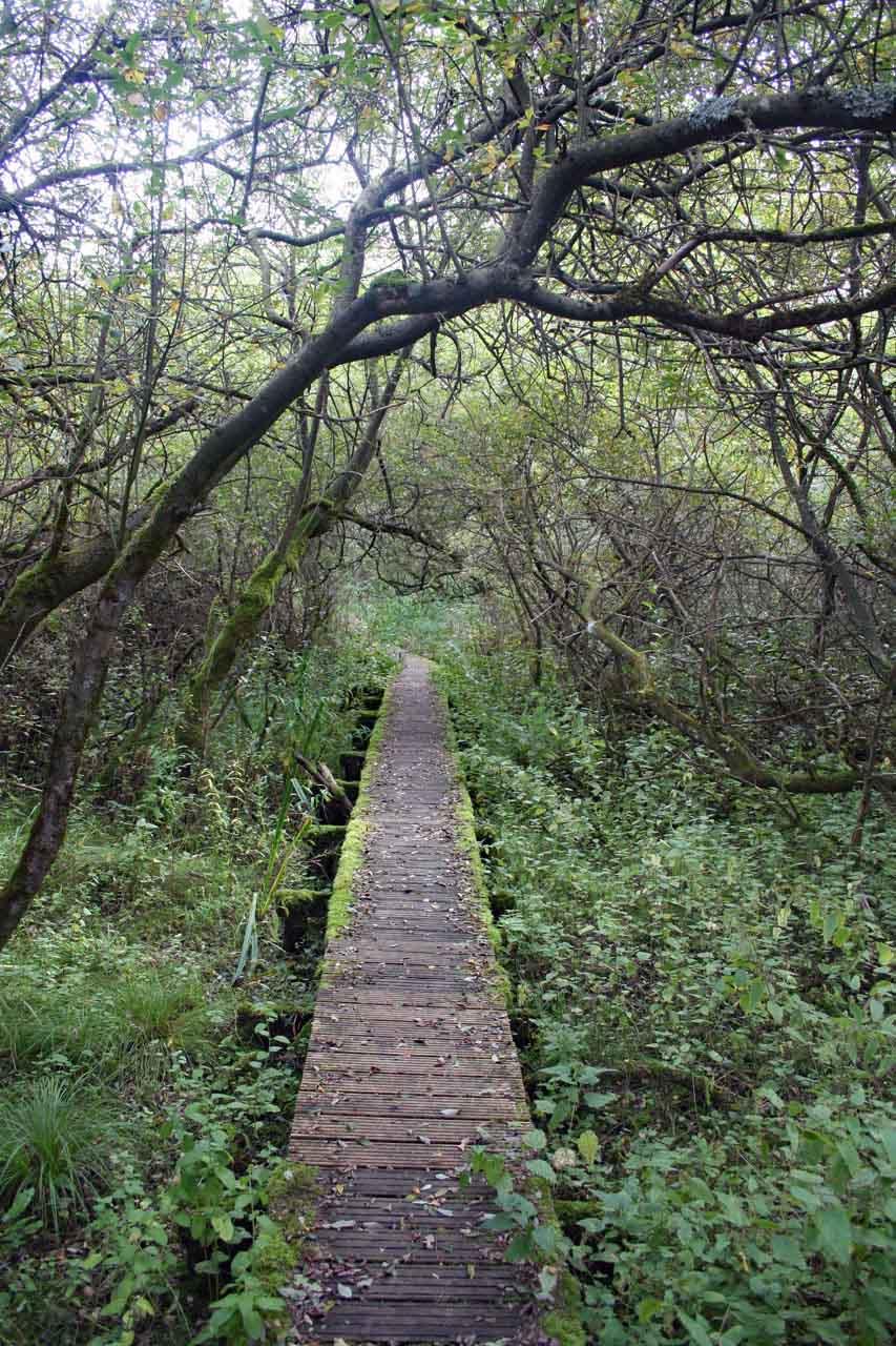 Holzsteg und Holzweg in einem Landschaftsschutzgebiet an der Ostsee
