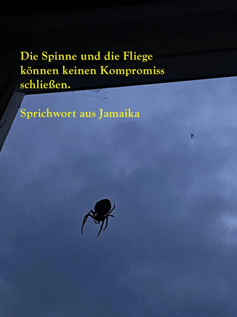 Die Spinne und die Fliege Zitat das Foto zeigt eine Kreuzspinne vor einem dunklen nachthimmel