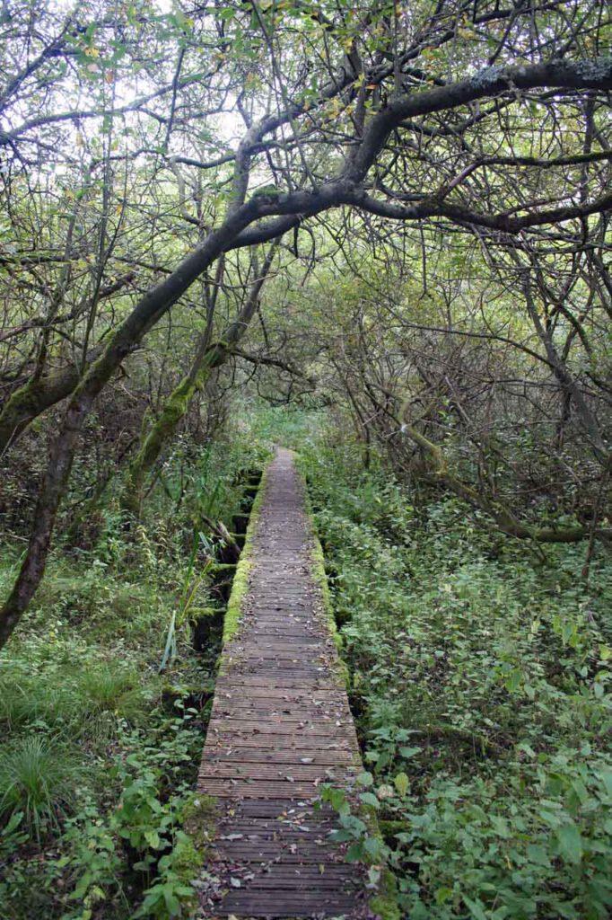 Lasst uns gehen auf einem Holzsteg
