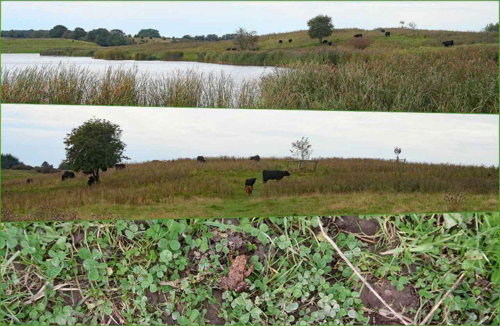 Collage Naturschutzgebiet mit Weiderindern und Erdkröte