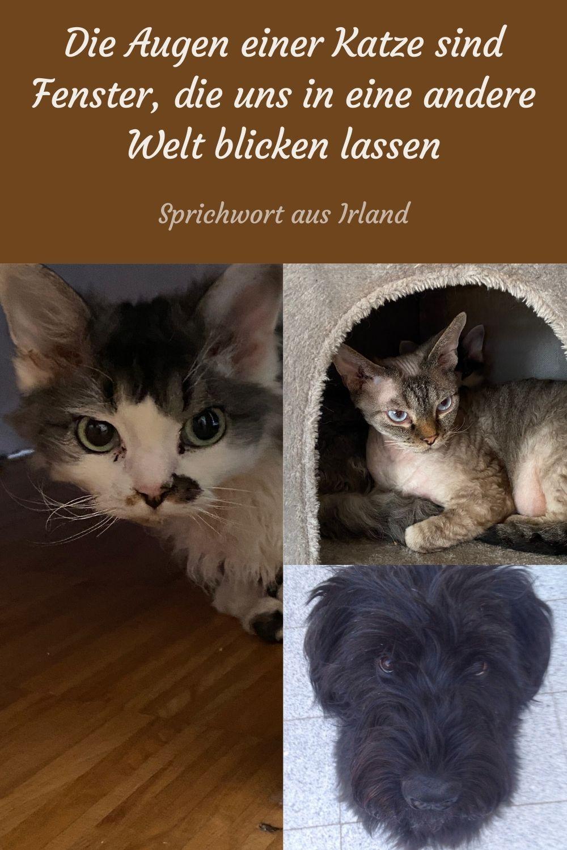 Die Augen einer Katze sind Fenster, die uns in eine andere Welt blicken lassen
