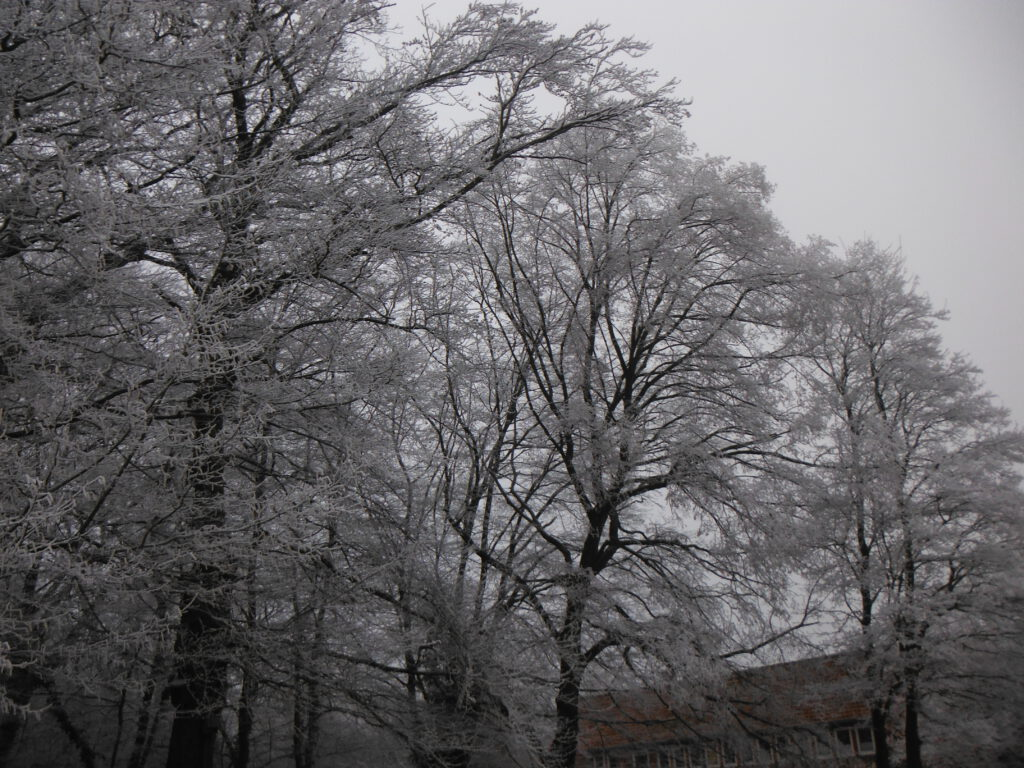Frost Giesener Wald Kiga