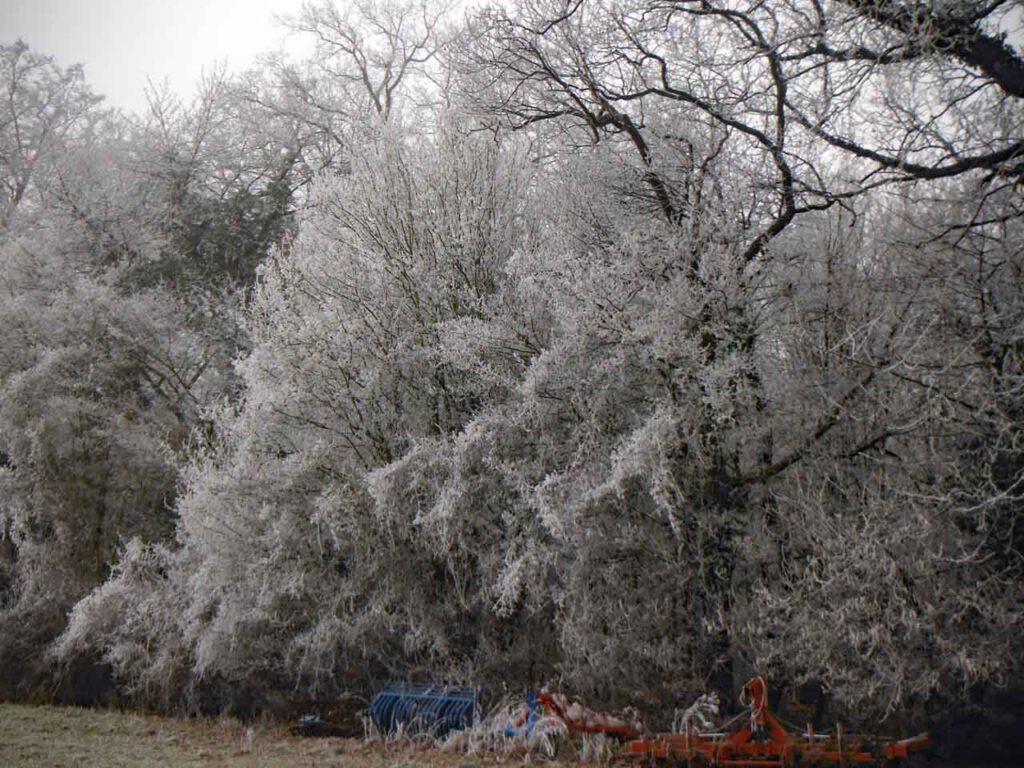 Frostige Erinnerungen Frost im Giesener Wald