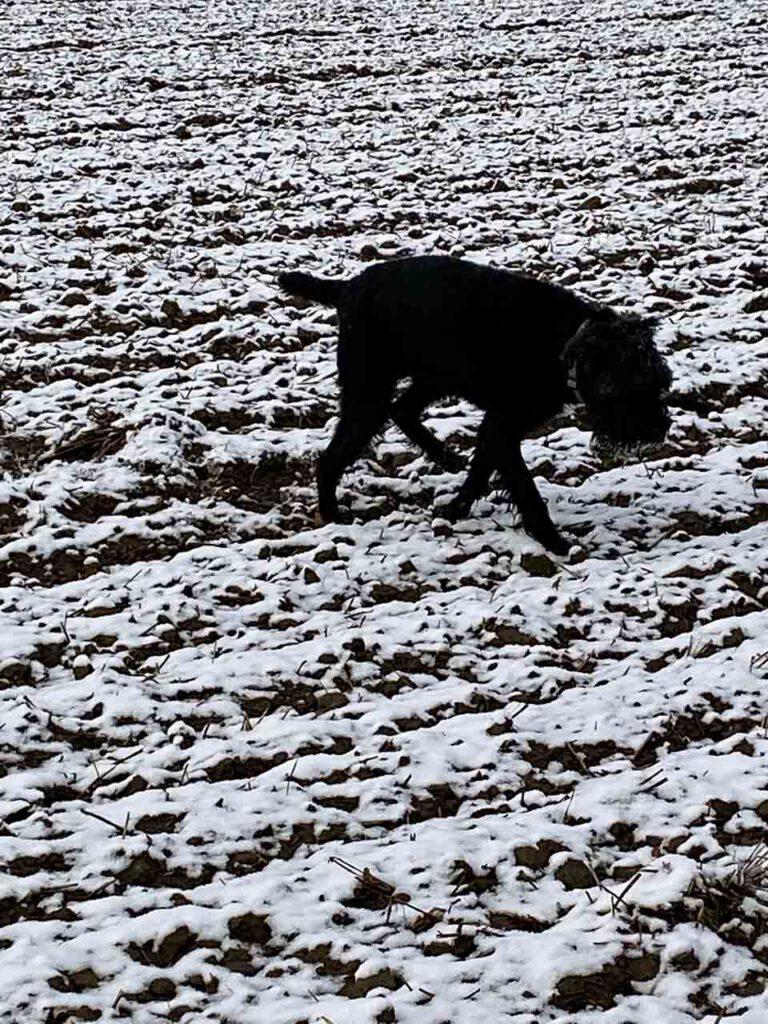 Schnee auf den Feldern