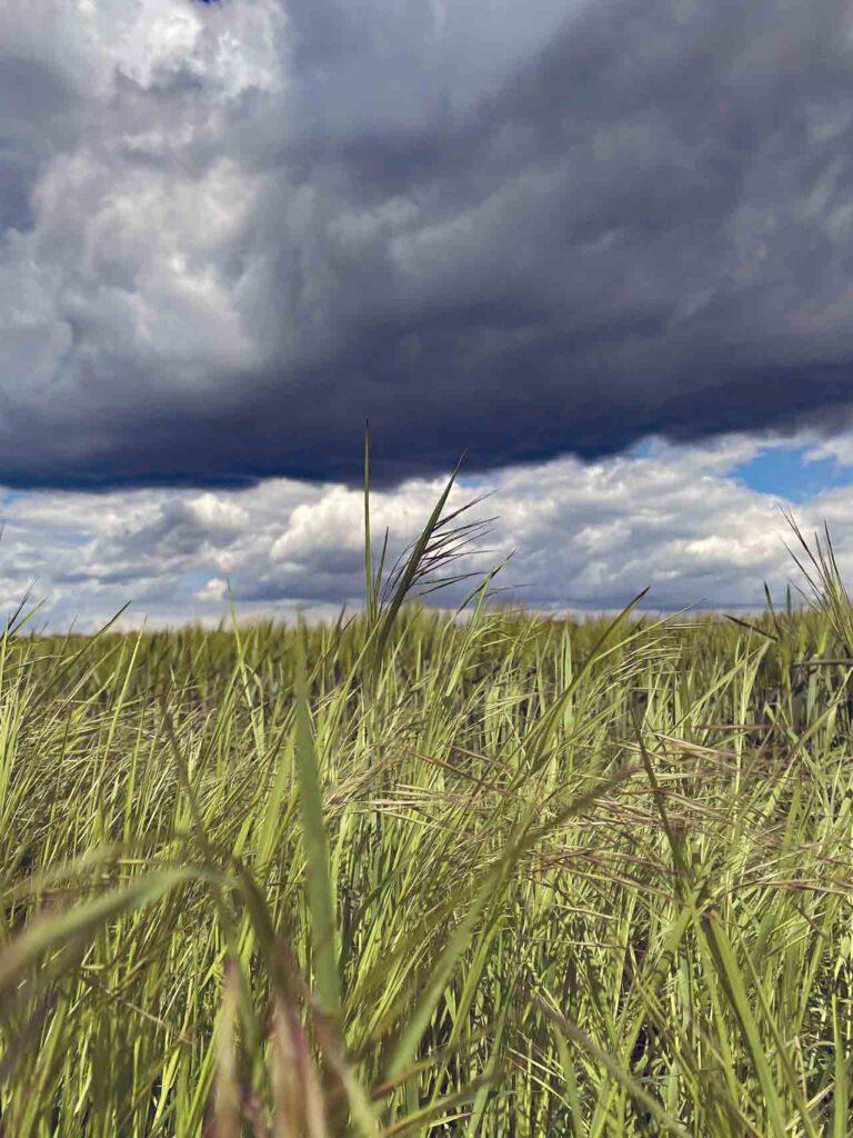 Regenwolken über den Feldern