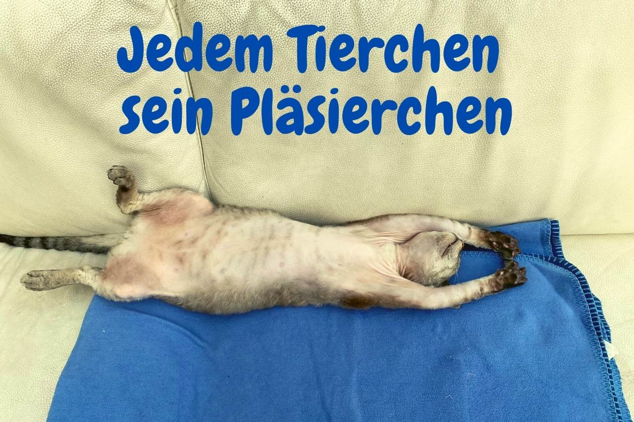 Jedem Tierchen Katze liegt lang ausgestreckt auf dem Sofa