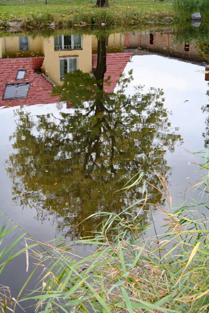 Steh ich dann Kopf? Baumspiegelgung in einem Teich