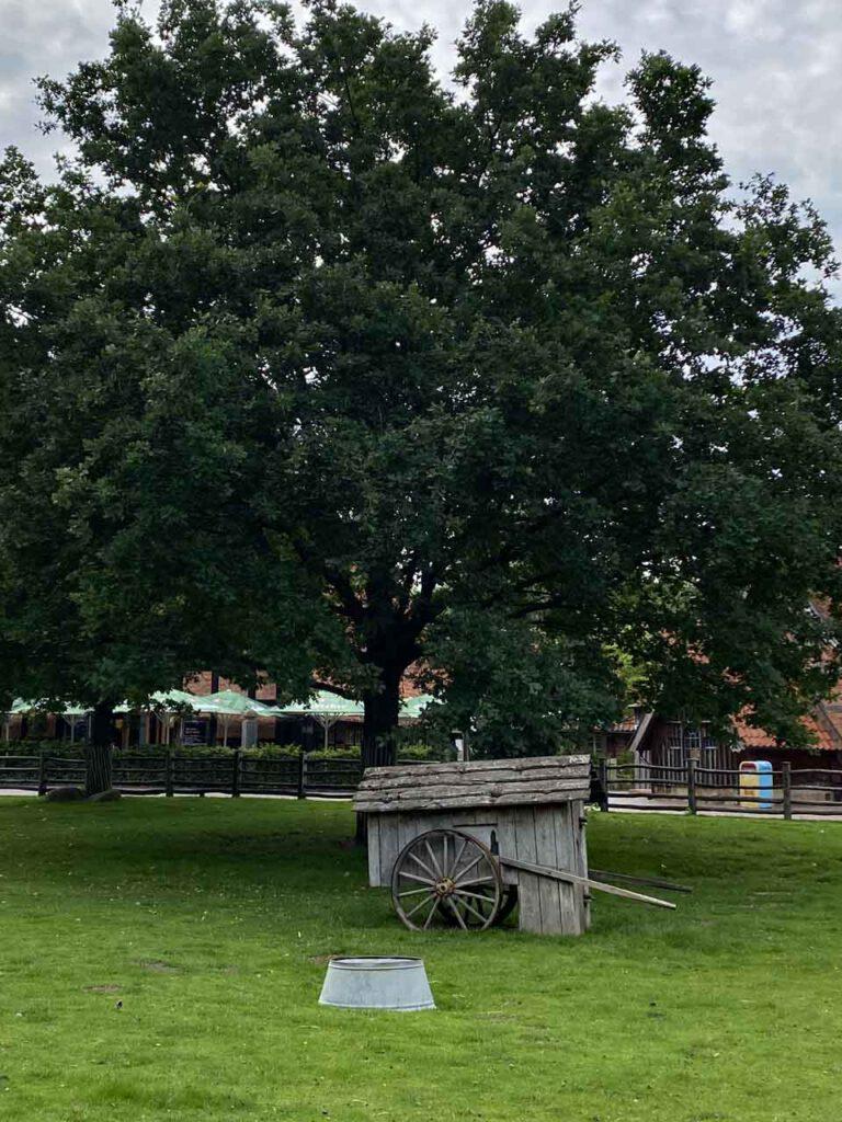 Baum auf dem Bauernhof im Zoo Hannover