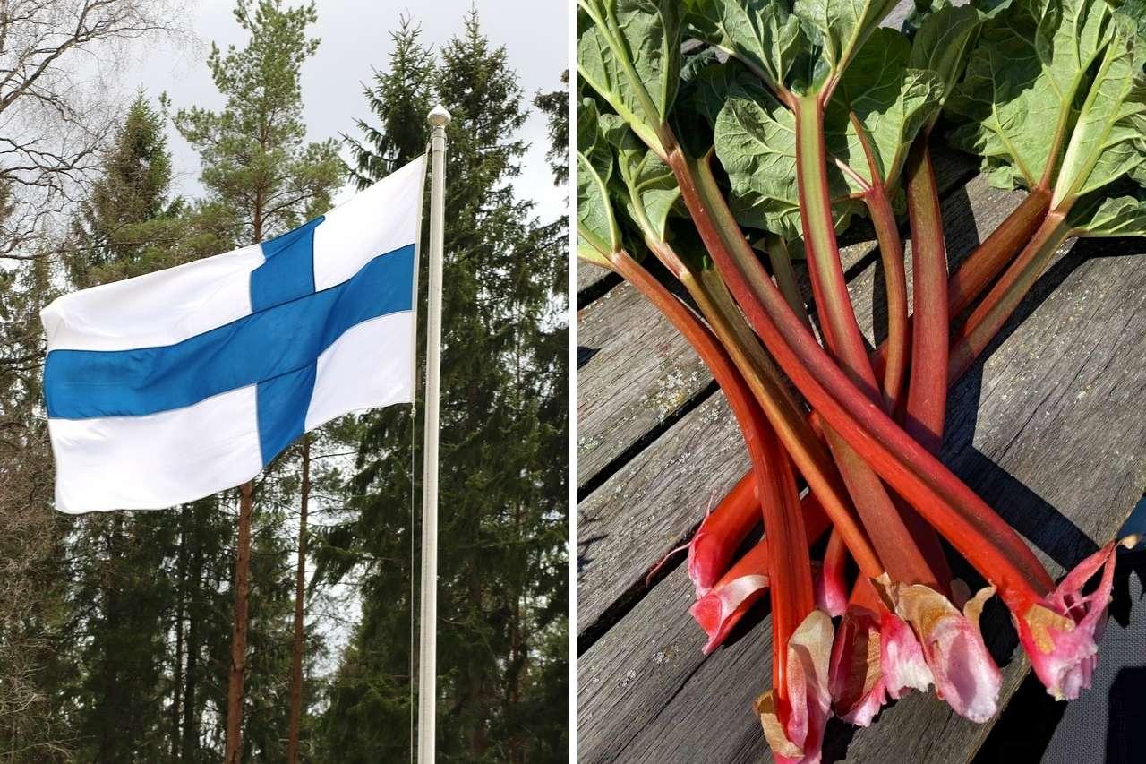 Finnlandflagge und Rhabarber