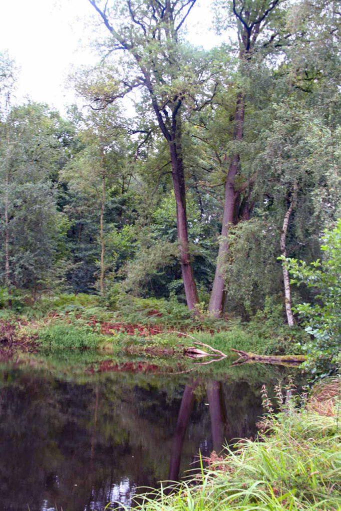 Teich Lüneburger Heide