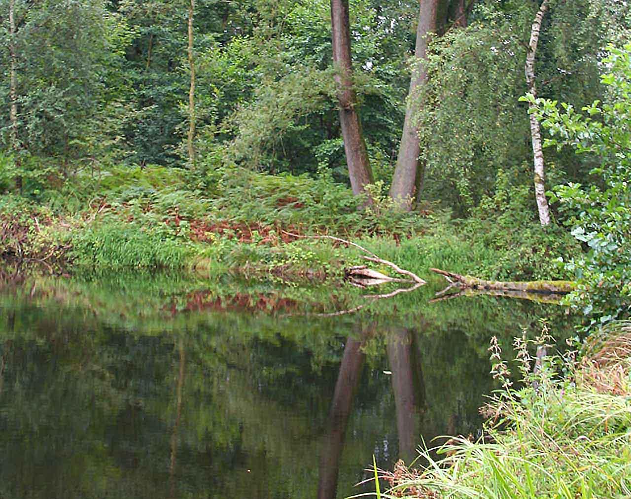 Spiegelungen Teich in der Lüneburger Heide