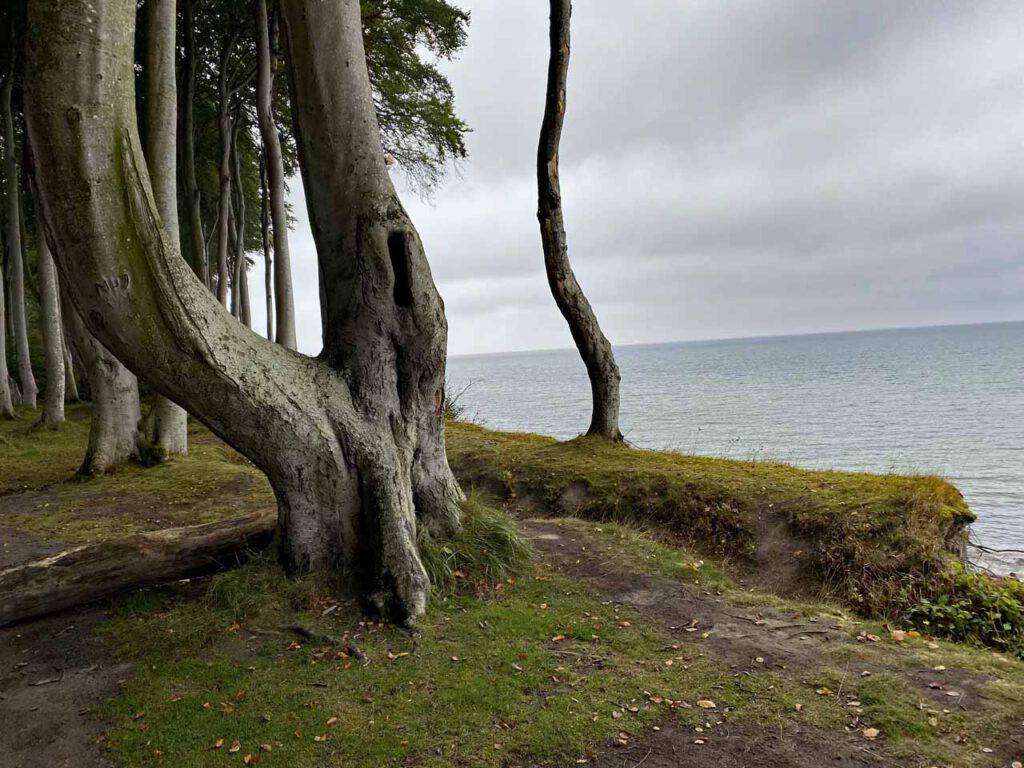 Steilküste Wald